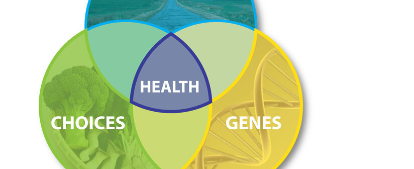 Gene Environment Interaction >> Gene Environment Interactions Epigenetics The