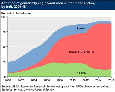 use of GMO corn in the US