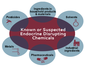 graphic showing various categories of EDCs