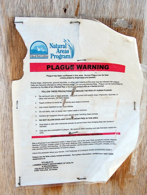 Plague warning in Colorado