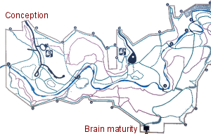 brain development map